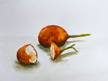 Watercolor painting passion fruit on white background Stock Image