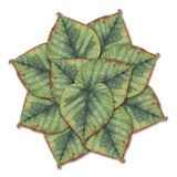 Watercolor painting pattern of green linden leaves Royalty Free Stock Photography