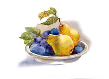 Watercolor painting: pears and plum. Beautiful pears and plums, painted in watercolor on white background Royalty Free Stock Photo