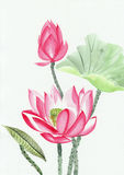 Watercolor painting of pink lotus flower. Original art, watercolor painting of pink lotus, Asian style painting Royalty Free Stock Images