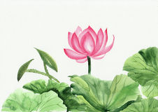 Watercolor painting of pink lotus flower. Original art, watercolor painting of pink lotus, Asian style painting Stock Photo