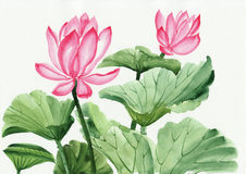 Watercolor painting of pink lotus flower. Original art, watercolor painting of pink lotus, Asian style painting Stock Image