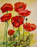 Watercolor painting of poppies Stock Images