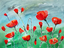 Watercolor painting, poppies Stock Image