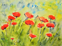 Watercolor painting, poppies Royalty Free Stock Image