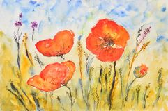 Watercolor painting, poppies Stock Photography