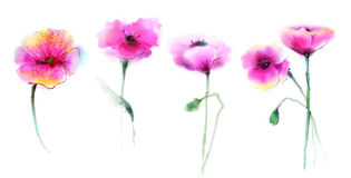 Watercolor painting poppy flower Royalty Free Stock Image