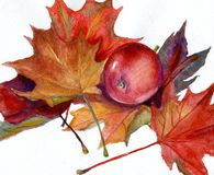 Watercolor painting - red apple and autumn leaves. MY WATERCOLOR PAINTING - RED APPLE AND RED AUTUMN LEAVES Stock Image