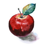 Watercolor painting of red apple. On white background Stock Photos