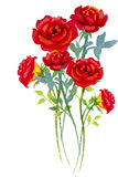 Watercolor painting  red bouqet, happy postcard colorful of roses. Royalty Free Stock Image