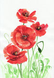 Watercolor painting of red poppies Stock Photo