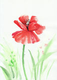 Watercolor painting of red poppy Stock Photo