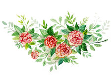 Watercolor painting of red roses Stock Image