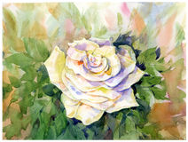 Watercolor painting of rose Stock Photo