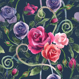 Watercolor painting roses in various colors arranged in a pattern. Royalty Free Stock Photography