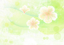 Watercolor painting of sakura flower Stock Photo