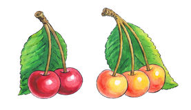 Watercolor painting of a set of fruit:cherries Stock Photos