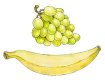 Watercolor painting of a set of fruit: grapes and banana Stock Images