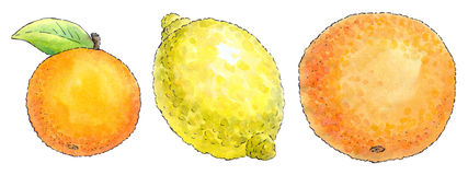 Watercolor painting of a set of fruit: mandarin, lemon and orang. Colorful watercolor painting with a black outline of a series of fruit: mandarin, lemon and Royalty Free Stock Images