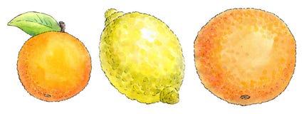 Watercolor painting of a set of fruit: mandarin, lemon and orang Royalty Free Stock Images