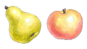 Watercolor painting of a set of fruit: pear and apple Stock Images