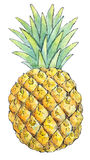 Watercolor painting of a set of fruit: pineapple Royalty Free Stock Photo