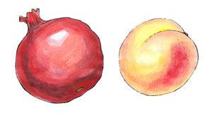 Watercolor painting of a set of fruit: pomegranate and peach Stock Photos