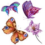 Watercolor painting set. Three bright beautiful butterflies, colombine flower on a stem. Isolated on white background. Royalty Free Stock Images