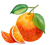 Watercolor painting of single orange with few slices Royalty Free Stock Image