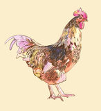 Watercolor painting sketch cock Stock Photo