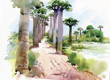 Watercolor painting of summer landscape park way with trees vector illustration Stock Photo