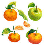 Watercolor painting: tangerines, green apple Stock Photography