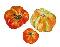 Tomatoes. Watercolor painting of three tomatoes Royalty Free Stock Photography