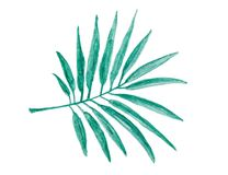 Watercolor painting - tropical green palm leaf isolated on white royalty free stock images