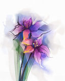 Watercolor painting violet lily flowers blossom. Hand Painted Close up of lilies floral petals in soft color and blurred style on white background Stock Photography