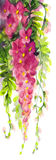 Watercolor painting. Violet wisteria Royalty Free Stock Photo
