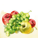 Watercolor painting on white background. Fruit, watercolor painting on white background Stock Images