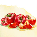 Watercolor painting on white background. Vegetables, watercolor painting on white background Stock Image