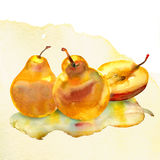 Watercolor painting on white background. Group of pears. watercolor painting on white background Royalty Free Stock Image