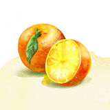 Watercolor painting on white background. Group of oranges. watercolor painting on white background Stock Photo