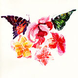 Watercolor painting on white background. Butterflies and Flowers. watercolor painting on white background Royalty Free Stock Images