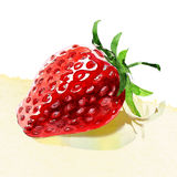 Watercolor painting on white background. Tasty strawberry. watercolor painting on white background Royalty Free Stock Photos