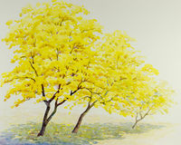 Watercolor painting yellow  color of golden tree flowers Royalty Free Stock Images