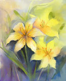 Watercolor painting yellow lily flower Royalty Free Stock Photo
