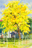 Watercolor painting yellow, orange color of golden shower tree flowers Stock Photography