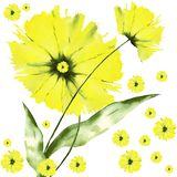 Collage of yellow watercolor flowers Stock Photo