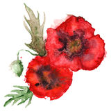 Watercolor pair of red poppies floral composition  Royalty Free Stock Photography