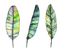 Watercolor palm leaves Stock Photos
