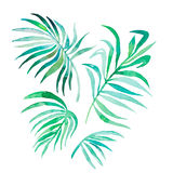 Watercolor palm leaves isolated on white.Vector Stock Image