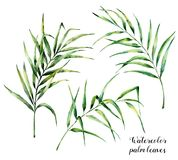 Watercolor palm leaves set. Hand painted botanical illustration with palm branches isolated on white background. Exotic royalty free illustration
